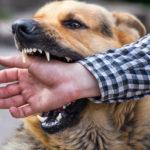Rüyanızda bir köpeğin sizi ısırdığını gördünüz mü?