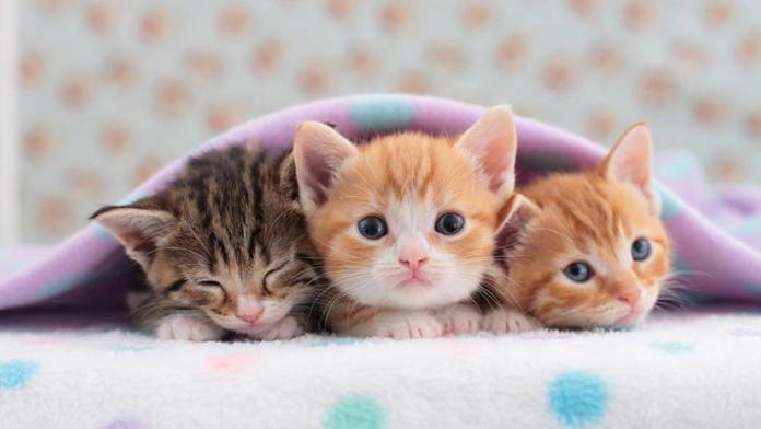 Rüyada Yavru Kedi Görmek Neye Işarettir Psikoloji
