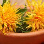 Mucizevi aspir yağının faydaları nelerdir?