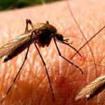 Sivrisineklerden kurtulmak için 7 doğal yöntem